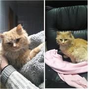 Взрослые котики ищут дом !